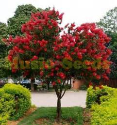 online buy wholesale red berry tree from china red berry tree wholesalers aliexpress com