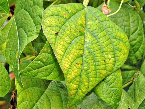 identifying plant nutrient deficiencies
