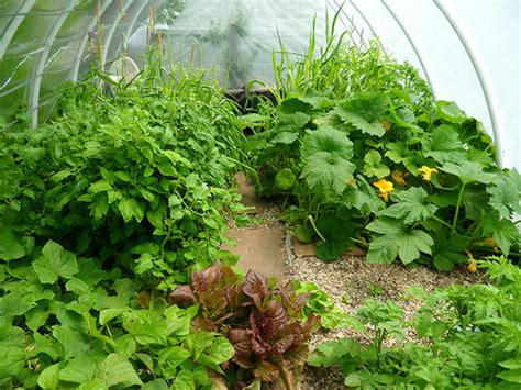 aquaponic vegetable garden aquaponic garden photos coast to coast am