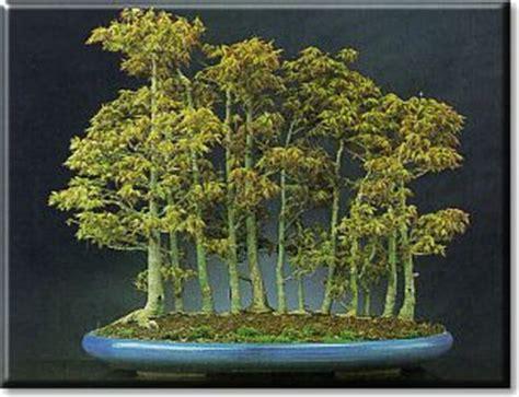 vasi bonsai giapponesi vasi e sottovasi per bonsai dal catalogo crespi