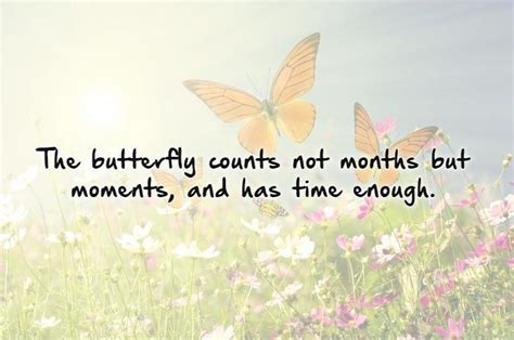 butterfly sayings butterfly quotes and sayings quotesgram