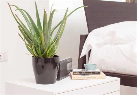 piante da letto piante in da letto fanno top audio