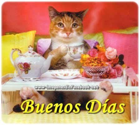 imagenes buenos dias con gatitos gatito lindo buenos dias imagenes y carteles