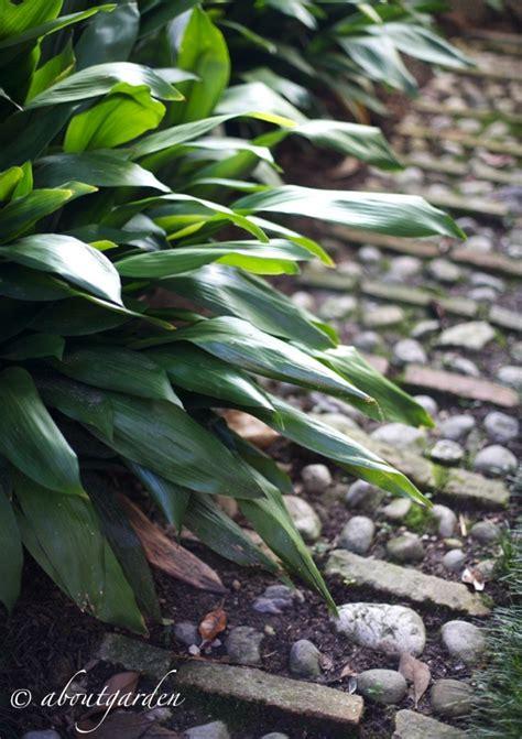 piante da cortile piante da cortile aboutgarden