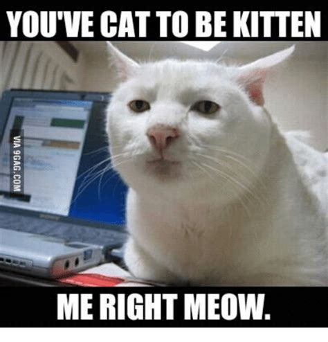 Cat Meow Meme - search cat meow memes on sizzle