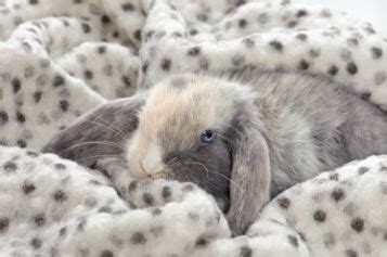 best bedding for rabbits 38 best images about hay for rabbits on pinterest hay bale seats raising and bunnies