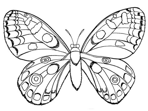 real butterfly coloring pages cute butterfly coloring pages cartoon butterfly coloring