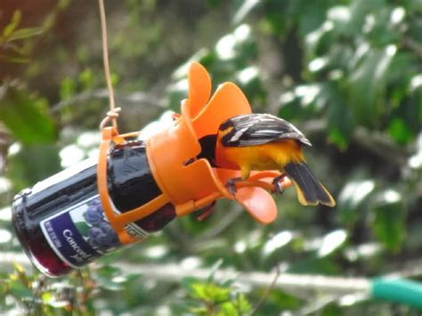 favorite oriole feeders