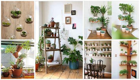 creative ideas   display  indoor plants