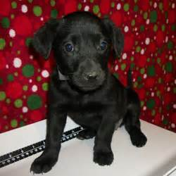 lifeline puppy rescue brighton co lifeline puppy rescue s adoptable pups this week photos huffpost