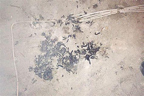 Marder Auf Dem Dachboden Loswerden 2153 by Marder Auf Dem Dachboden Loswerden Marder Auf Dem