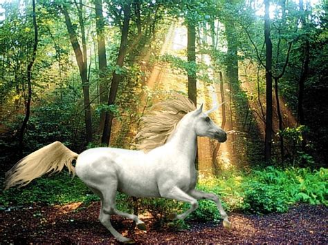 Rainbow Wall Murals unicorn pictures horse photo web
