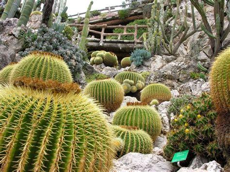 giardino esotico di monaco giardino esotico di monaco monaco 98000 alpes