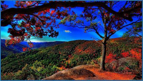 nature wallpaper screensaver