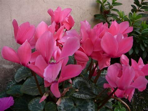 decora con plantas de interior decora con plantas de interior parte 2 decoraci 243 n de