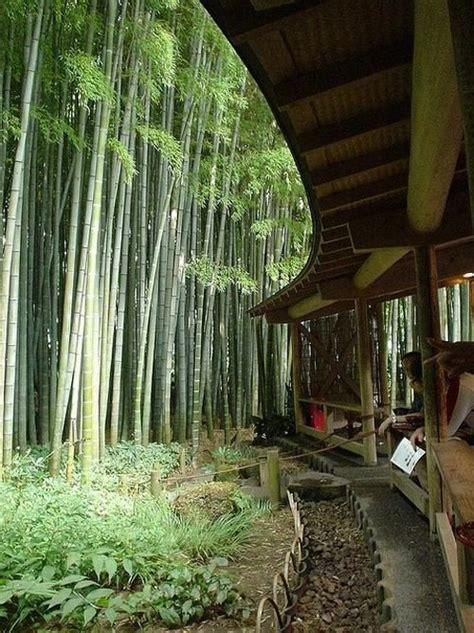 Bambus Im Kübel Kaufen 63 by 220 Ber 1 000 Ideen Zu Bambus Balkon Auf Balkon