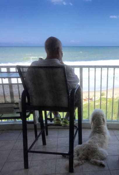 spleen cancer in golden retrievers s forever family golden retriever rescue of mid florida