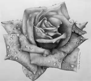 10 beautiful rose drawings for inspiration ideastand