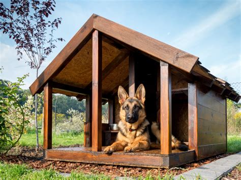 outdoor dog houses for winter cold weather tips for outdoor dogs j n feed and seed