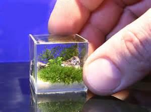 All about betta fish: worldest smallest planted aquarium