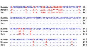 Amino acid sequence protein structure primary