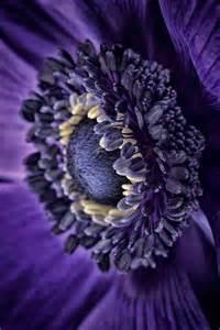 Délicieux Les Plus Belles Deco Interieur #2: arbuste-fleurs-violettes-fleur-de-violette-fleur-violette-sauvage-beauté-fleurie.jpg