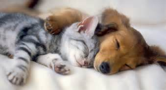 cute amp cool pets 4u kittens and puppies pictures
