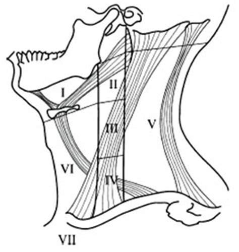 caracterizacion de cadenas ganglionares cervicales documento sin t 237 tulo