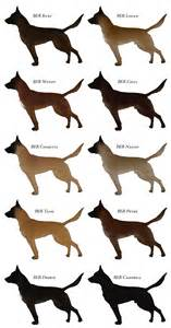 belgian malinois colors belgian malinois breeds picture