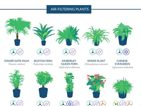 best air the best air purifying houseplants according to nasa