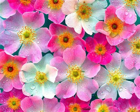 Flores Coloridas 1280x1024 Imagenswiki Com Free Flower Powerpoint Template Wallpapers 1280 X 1024