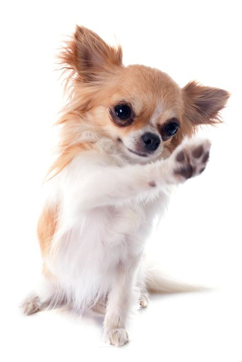why dogs paws paws why you should often care for your s paws health news