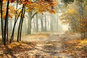 Wallpaper Leaf Fog Nature Autumn Trees Seasons
