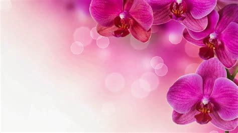 wallpaper bunga cantik pink flowers backgrounds