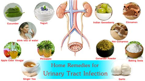 home remedies for uti urinary tract infection