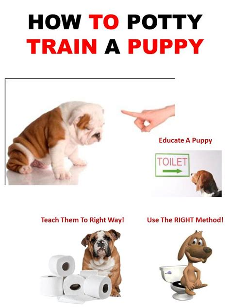 how to poty a how to potty a puppy prlog