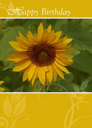 Sunflower Card To Say Happy Birthday! Free Flowers eCards