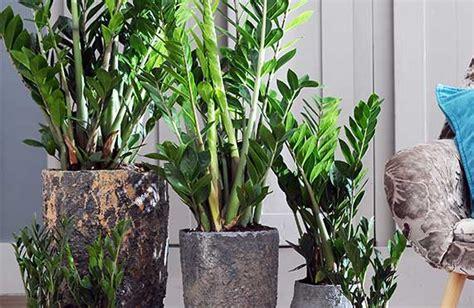 bodendecker pflanzen winterhart 915 pflanzen kaufen bei obi obi ch