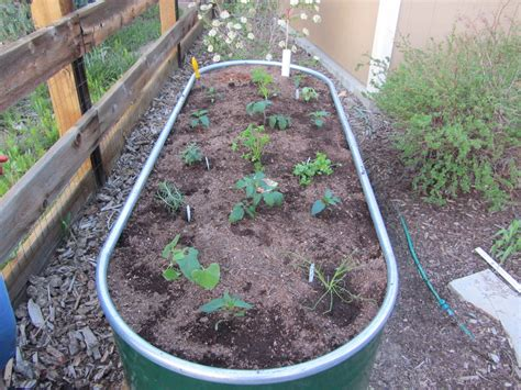 Self Watering Trough Planter by A Self Watering Trough Planter Valorie S Garden