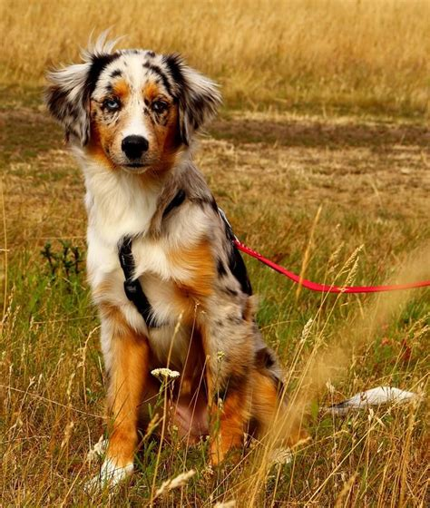 canine breed meet the newest breeds of westminster mnn nature network