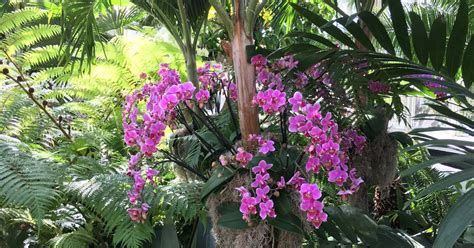 T Gardens Nyc Bart Boehlert S Beautiful Things The Orchid Show At The