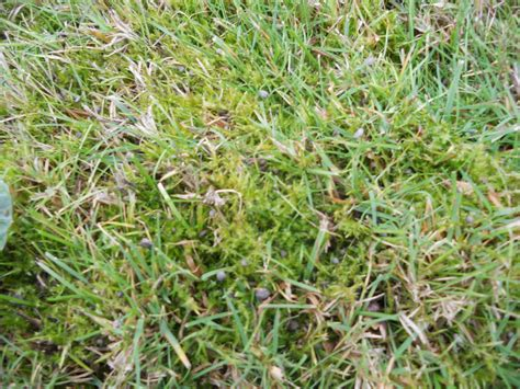 northwest garden guide moss growing in the sun