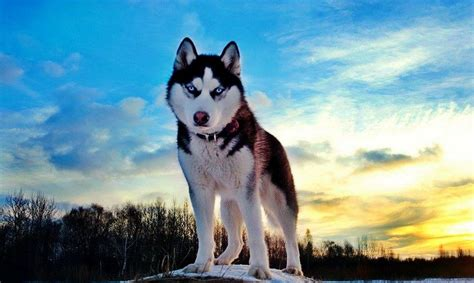 prettiest dogs image gallery most beautiful breeds