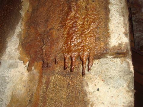 bat bugs problems  bat bugs  massachusetts