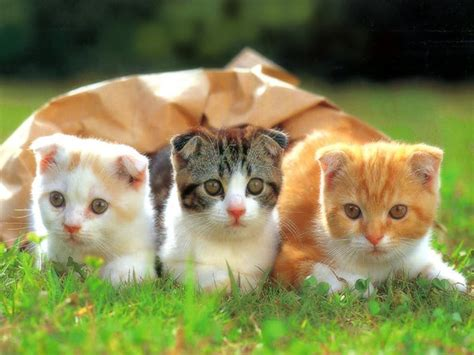 adorable funny  cute cat pictures funpulp