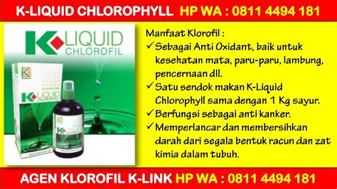 K Liquid Chlorophyll Klorofil Agen Distributor Termurah Grosir promo k link liquid chlorophyll harga hp wa 0811 4494 181