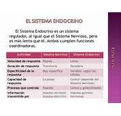 Sistema Endocrino  Generalidades La Hormona