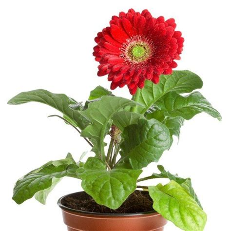 easy plants to grow inside 28 best easy flowers to grow indoors 20 edible plants