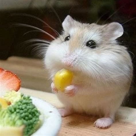 vegetables a can eat vegetables hamsters can eat 7 steps with images