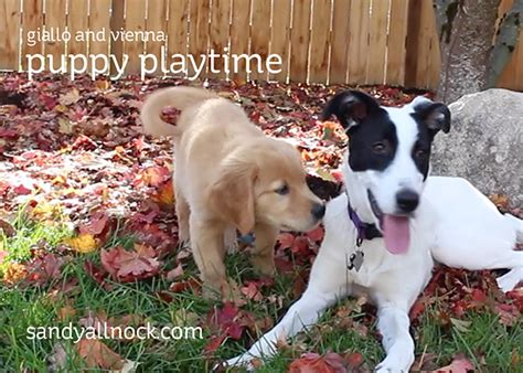 puppy play time puppy playtime and a updates allnock
